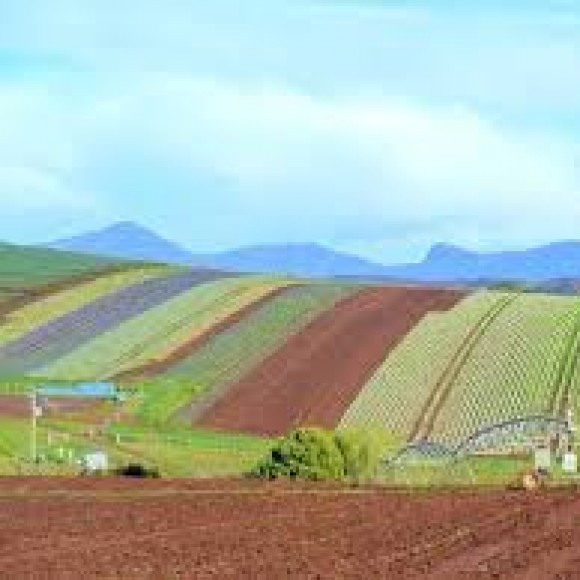 Profile picture of Vegetable Farm Owner Operator in Tasmania Seeks Equity Partner - storyID 4042